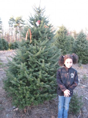 At the tree farm.