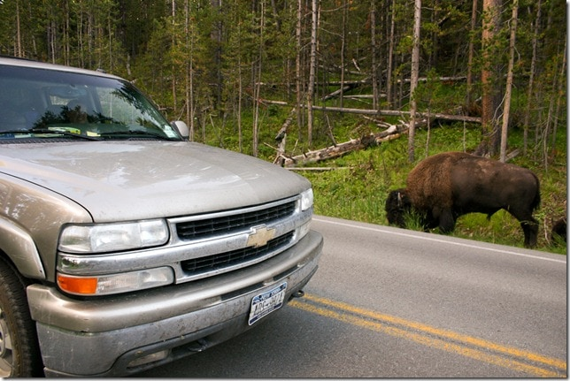 Chevy Suburban - Buffalo nears in Yellowstone