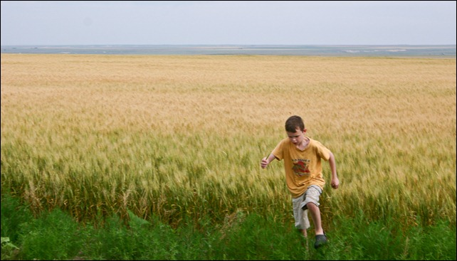 Boy running in the wheat fields of Kansas.