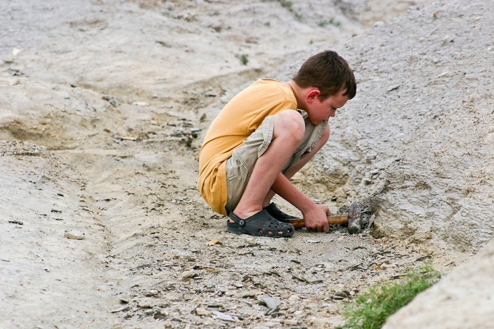 Fossils: Learn About Paleontology in Kansas with Kids