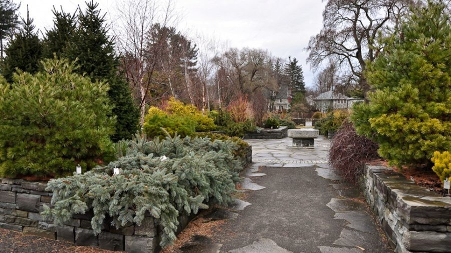 Photo Essay: A Garden Tour at Cornell Plantations