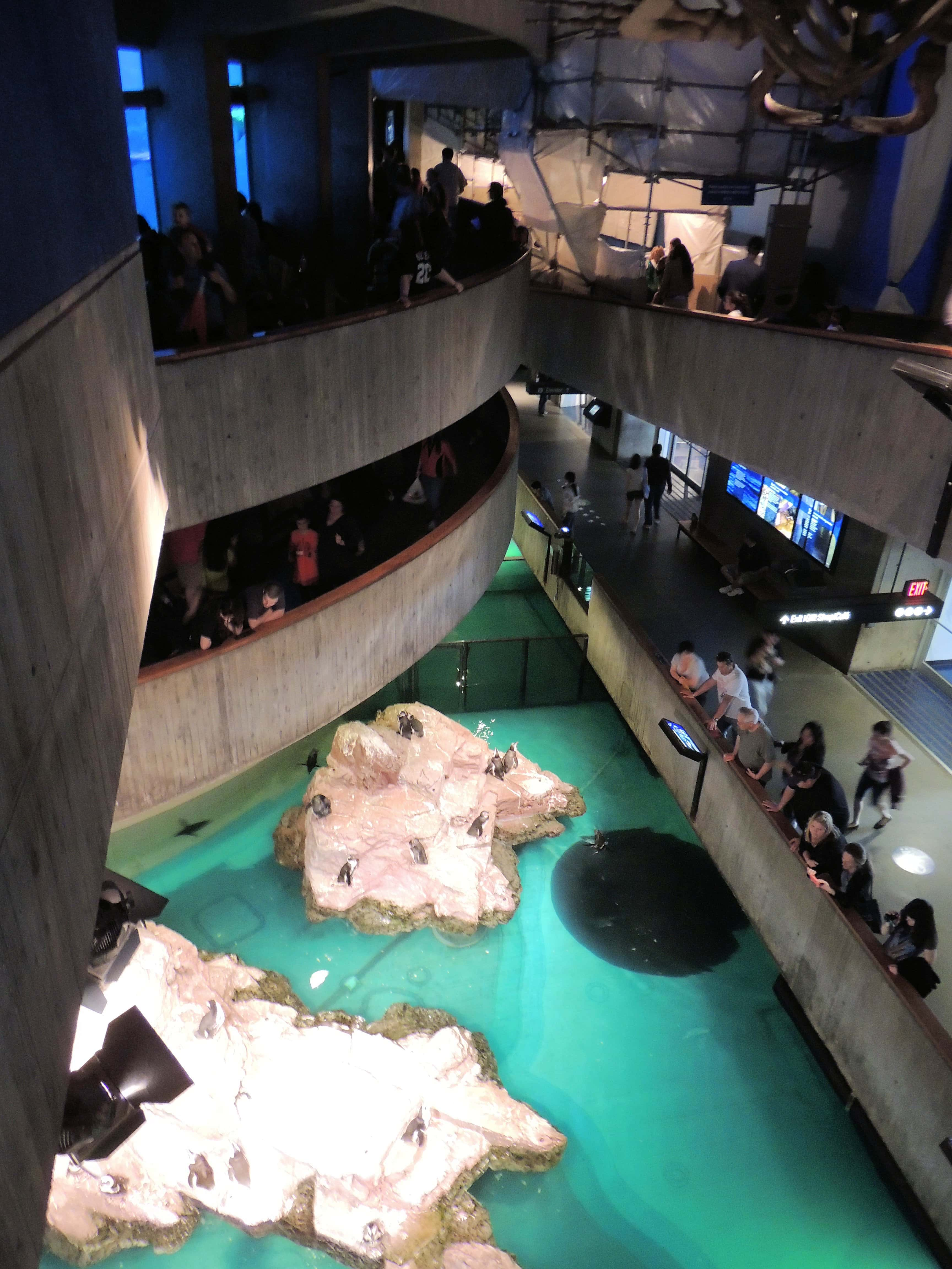 Giant Ocean Tank And Part Of The Penguin Exhibit New