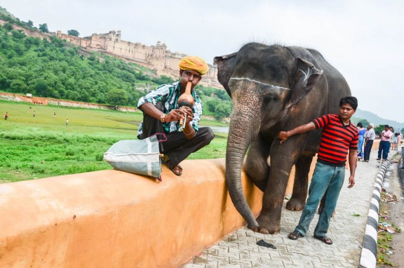 Amber Fort elephant - Jaipur, India