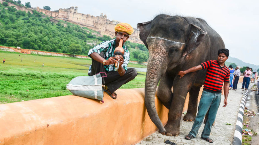 Amber Fort elephant and a flute seller at Amber Fort- Jaipur, India