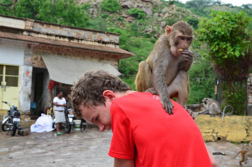Got a monkey on his back at the Monkey Temple in Jaipur, India