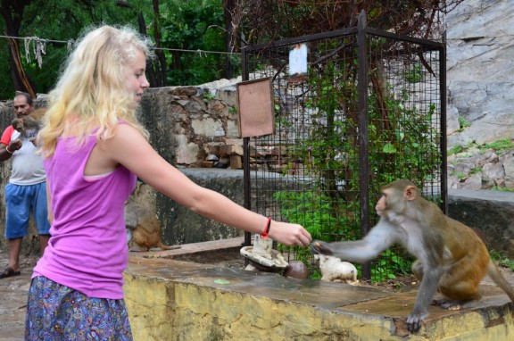 Monkey Temple - feeding peanuts to a monkey, one at a time. Jaipur, India