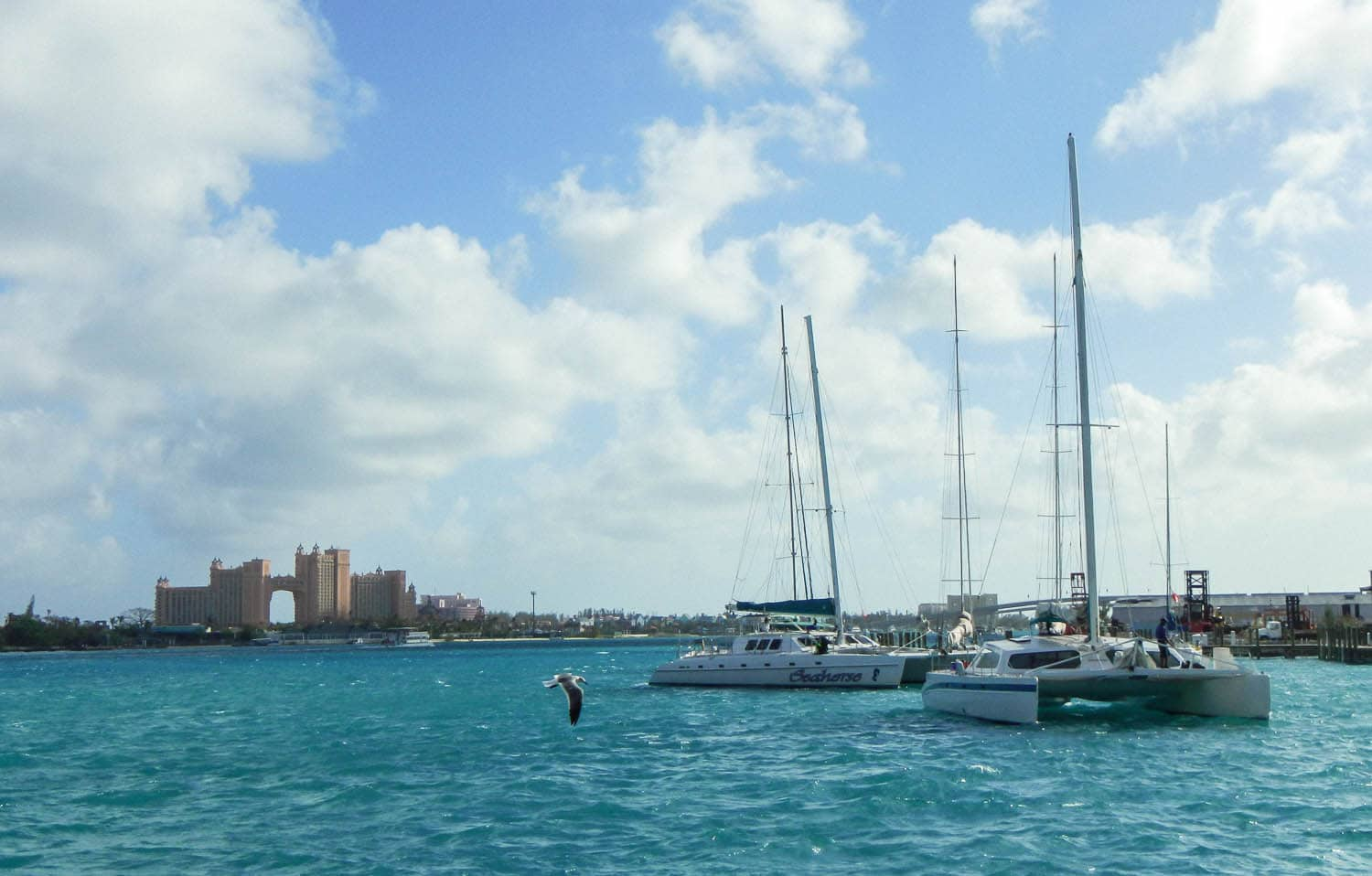 Seahorse Sailing and Snorkeling In The Bahamas