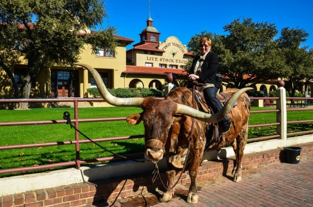 Texas Longhorn - Fort Worth Stockyards - Fort Worth, TX