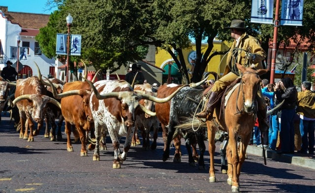 cattle drive - Fort Worth Stockyards - Fort Worth, TX