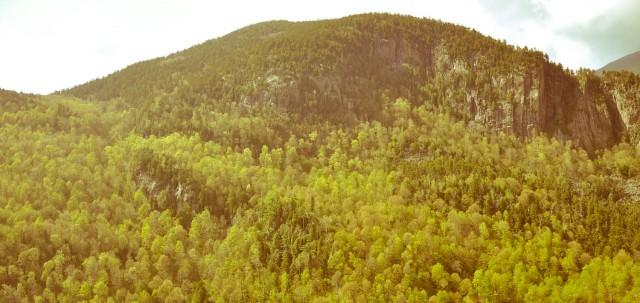 Adirondacks - wilder now than they were 100 years ago.