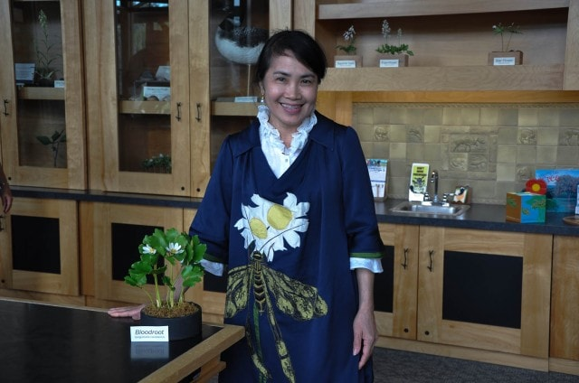 "Supawadee ""Pa"" Ngamhuy posed with a clay polymer model of a Bloodroot plant in the Naturalists Cabinet at the Wild Center."
