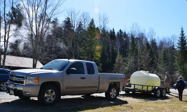 Hauling in the maple sap on a truck.