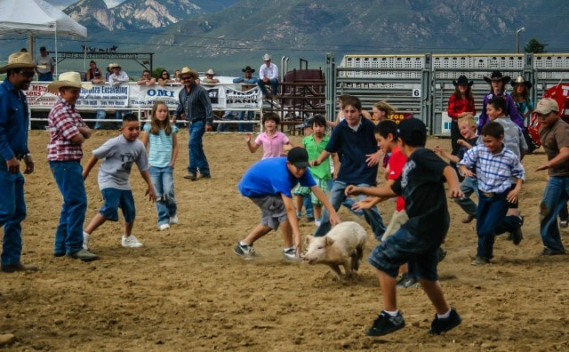 Greased pig contest at Rodeo de Taos in Taos, New Mexico.