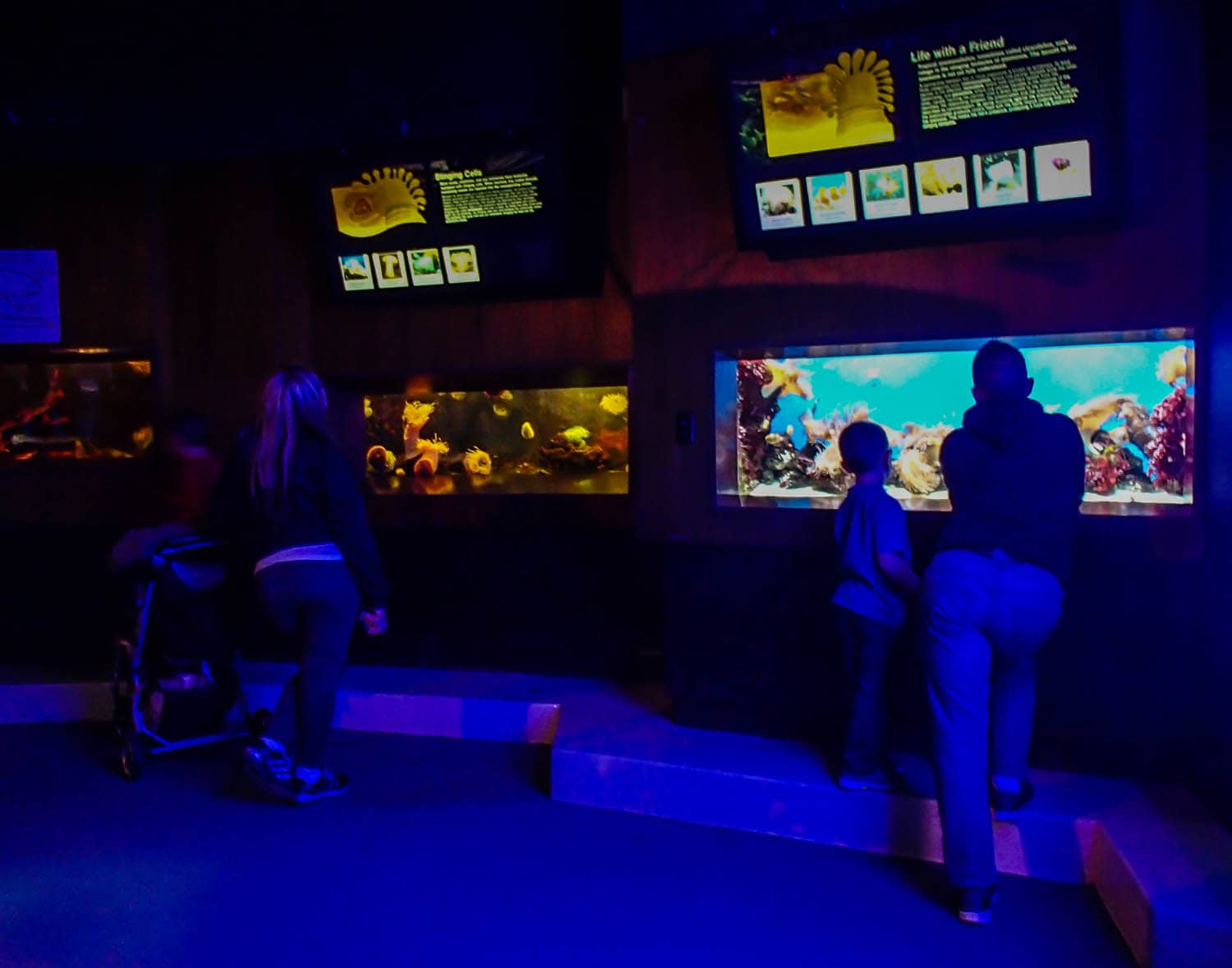 Family learning about coral reefs at the Aquarium of Niagara in Niagara Falls, NY.